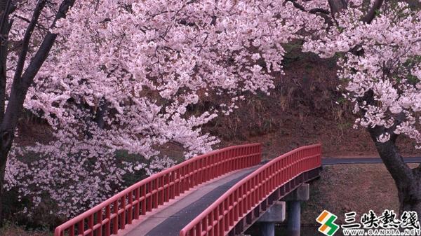 國內旅游大數據顯示 武漢成賞櫻最受歡迎…